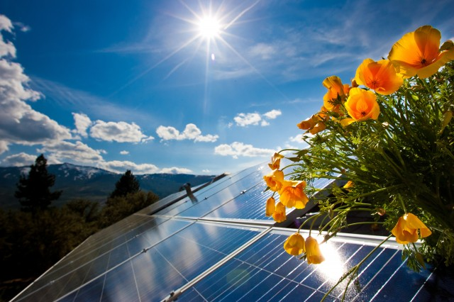 Rooftop Solar with California Daisies